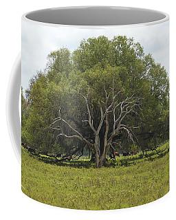 Florida Pasture Oak Coffee Mug