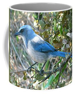 Florida Scrub Jay Coffee Mug
