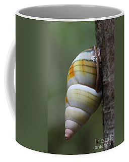 Coffee Mug featuring the photograph Florida Tree Snail by Paul Rebmann