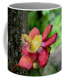 Flower Of Cannonball Tree Singapore Coffee Mug