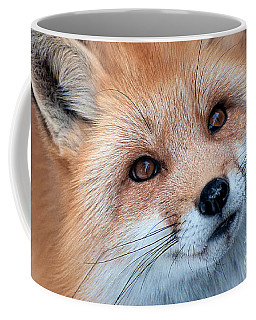 Coffee Mug featuring the photograph Foxy Lady by Bianca Nadeau