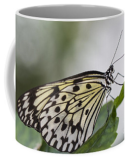 Fragile Beauty Coffee Mug