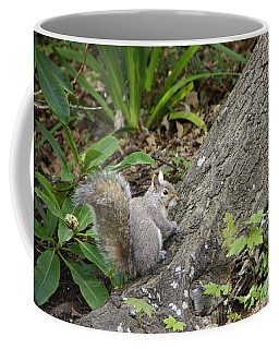 Coffee Mug featuring the photograph Friendly Squirrel by Marilyn Wilson
