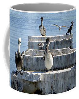 Pelican Friends Coffee Mug