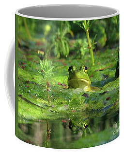 Frog Coffee Mug by Douglas Stucky