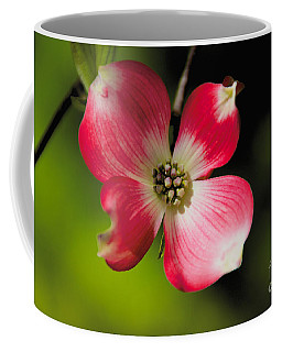 Coffee Mug featuring the photograph Fruit Tree Flower by William Norton