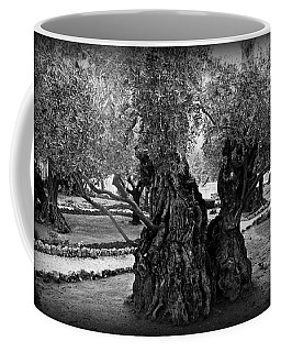 Garden Of Gethsemane Olive Tree Coffee Mug