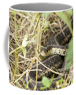 Coffee Mug featuring the photograph Garter Snake by Jeannette Hunt
