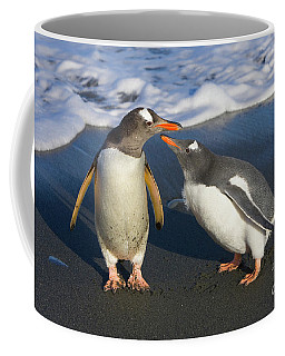 Gentoo Penguin Chick Begging For Food Coffee Mug