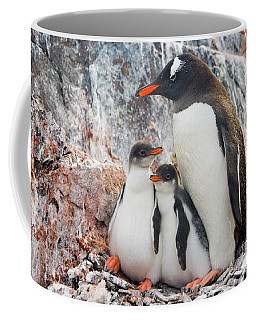 Gentoo Penguin Family Booth Isl Coffee Mug
