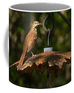Georgia State Bird - Brown Thrasher Coffee Mug