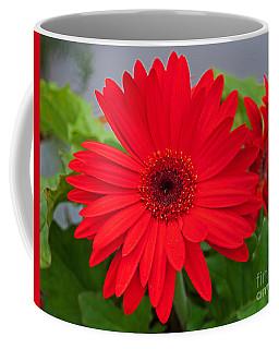 Gerbera Love Coffee Mug
