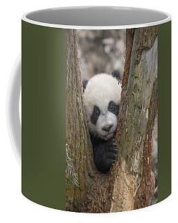 Giant Panda Cub Bifengxia Panda Base Coffee Mug