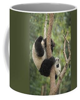 Giant Panda Cub In Tree Chengdu Sichuan Coffee Mug