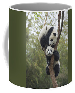 Giant Panda Cubs Playing Chengdu Coffee Mug