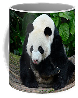 Giant Panda With Tongue Touching Nose At River Safari Zoo Singapore Coffee Mug