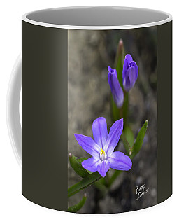Coffee Mug featuring the photograph Glory Of The Snow by Betty Denise
