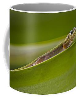 Gold Dust Day Gecko Coffee Mug by Venetia Featherstone-Witty