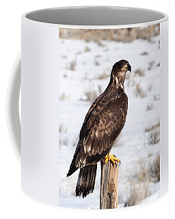 Golden Eagle On Fencepost Coffee Mug
