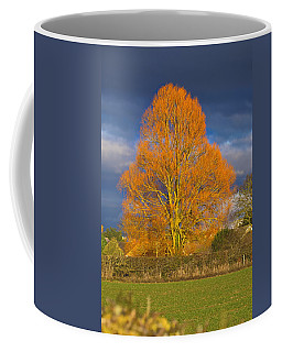 Coffee Mug featuring the photograph Golden Glow - Sunlit Tree by Paul Gulliver