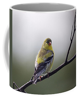 Coffee Mug featuring the photograph Goldfinch Molting To Breeding Colors by Susan Capuano