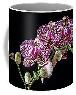 Gorgeous Orchids Coffee Mug