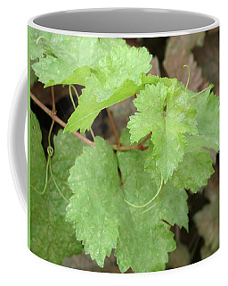 Coffee Mug featuring the photograph Grapevine by Laurel Powell