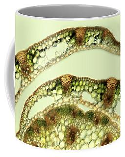 Grass Stalk Tissues, Lm Coffee Mug