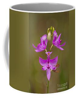 Grasspink #1 Coffee Mug by Paul Rebmann