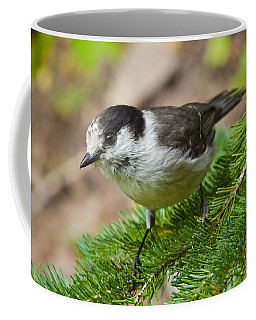 Gray Jay On Fir Tree Coffee Mug