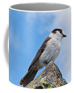 Gray Jay With Blue Sky Background Coffee Mug