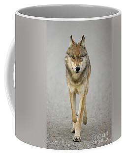 Gray Wolf Denali National Park Alaska Coffee Mug