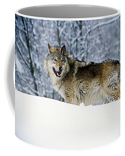 Gray Wolf In Snow, Montana, Usa Coffee Mug