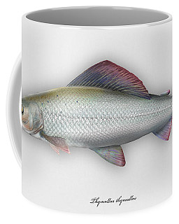 Grayling - Thymallus Thymallus - Ombre Commun - Harjus - Flyfishing - Trout Waters - Trout Creek Coffee Mug