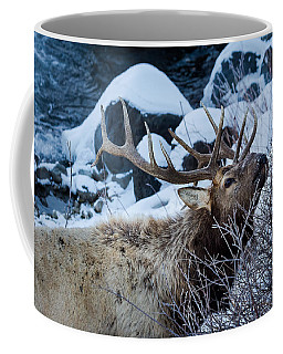 Coffee Mug featuring the photograph Grazing Elk by Michael Chatt