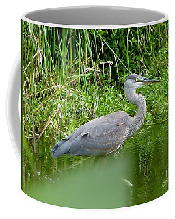 Coffee Mug featuring the photograph Great Blue Heron  by Susan Garren