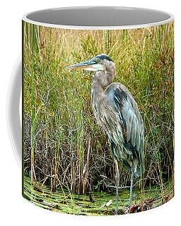 Great Blue Heron Waiting For Supper Coffee Mug by Eti Reid