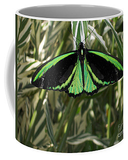 Coffee Mug featuring the photograph Green Butterfly by Brenda Brown