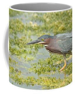 Green Heron On The Hunt Coffee Mug