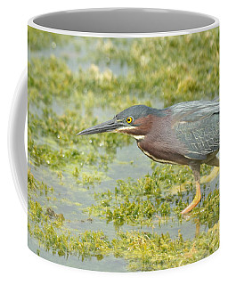 Green Heron On The Hunt Coffee Mug