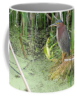 Coffee Mug featuring the pyrography Green Heron by Ron Davidson