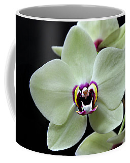 Green Hybrid Phalaenopsis Flower With A Red Wine Center Coffee Mug