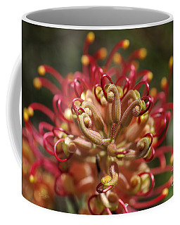 Grevillea Superb Australian Flora Coffee Mug by Joy Watson