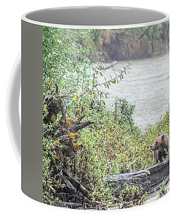 Grizzly Bear Late September 2 Coffee Mug