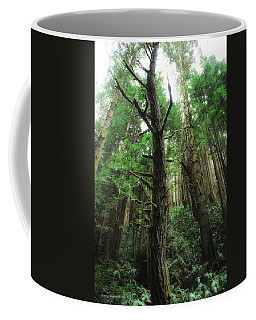 Groovin With The Redwoods Coffee Mug