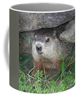 Groundhog Hiding In His Cave Coffee Mug