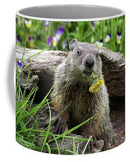 Groundhog  Kit Marmota Monax Coffee Mug