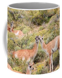 Guanaco Coffee Mug