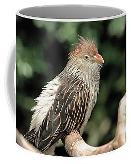 Guira Cuckoo Coffee Mug by Dennis Baswell