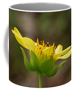 Coffee Mug featuring the photograph Hairy Leafcup by Paul Rebmann